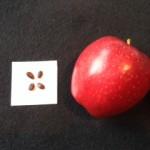 Apple-Seed