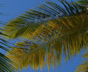 Palm Branch